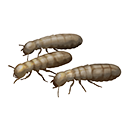 icon_handful_of_termites.png Symbol